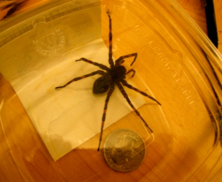 Northeastern Pennsylvania Spiders http://badluckcity.wordpress.com/2009/08/04/spider/